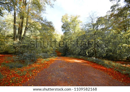Landscapes, Epping Forest
