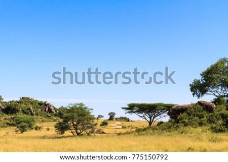 Landscapes of savanna Serengeti. Tanzania, Africa
