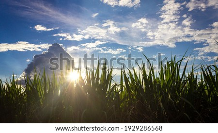 Landscapes of sugarcane crops in the department of Valle del Cauca Colombia. Foto stock ©