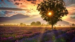 Landscapes with sunrises filmed in Bulgaria.