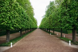 Landscaping decorative design. Raws of trees in park alley with pathways