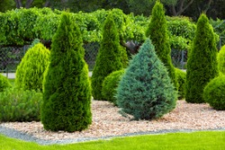 Landscaping of a backyard garden with evergreen conifers and thuja by yellow stone mulch in a summer greenery park with decorative landscape design, nobody.