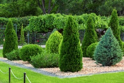 Landscaping of a backyard garden with evergreen conifers and thuja mulched by yellow stone in a summer park with decorative landscape design, nobody.