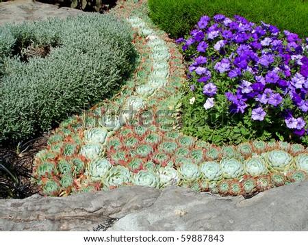 Landskape design with Houseleek (Sempervivum species), also called stone-crop.