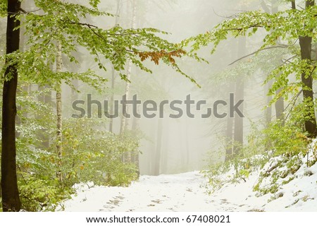 Lane in the misty forest in early autumn with snow lying on the ground.