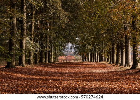 Lane of beeches in autumn with open end Stockfoto ©