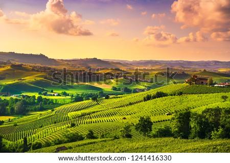 Langhe vineyards sunset panorama, near Barolo, Unesco Site, Piedmont, Northern Italy Europe.
