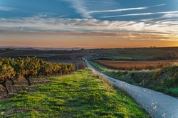 Languedoc-Roussillon vineyard crossed by small road at sunset