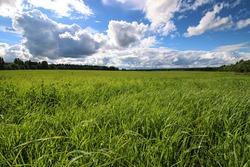 lanscape meadow sky cloud
