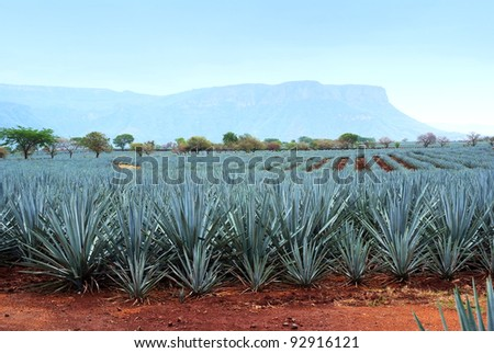Lanscape tequila mexico