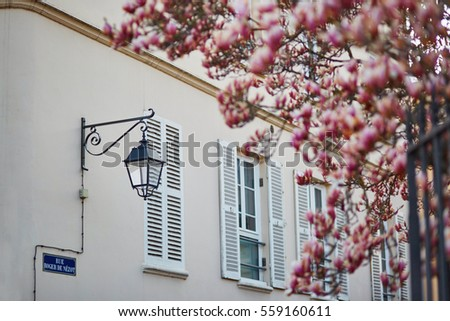 Lantern and old wooden shutters on a building in French village with pink magnolia in full bloom