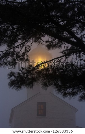 Lantern of the Old Point Loma Lighthouse in the fog. Tree branches in the foreground.