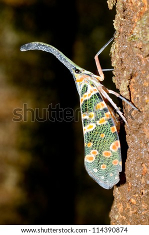 lanternfly on the tree