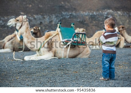 Lanzarote, Canary Islands. Little boy waiting dromedaries for tourist at Timanfaya National Park . A volcanic landscape in background .