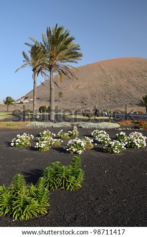Lanzarote�´s vegetation in street square