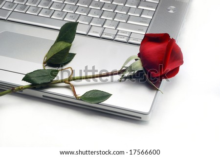 Laptop and Rose in white background.