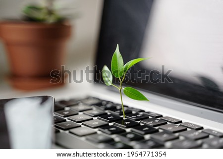 Laptop keyboard with plant growing on it. Green IT computing concept. Carbon efficient technology. Digital sustainability  Stock foto ©
