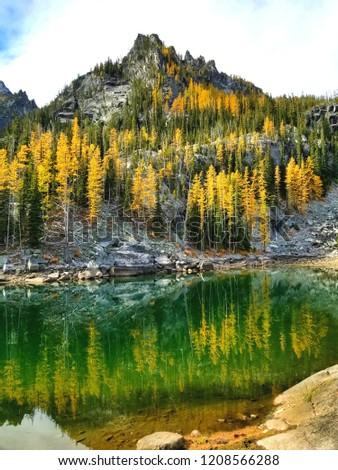 Larch trees reflecting at Lake Colchuck.