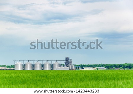 Large agriculture elevator near the field sown with wheat. Modern rural agricultural production.