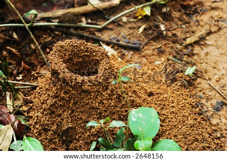 Large  ant hill in the Amazon jungle, Peru