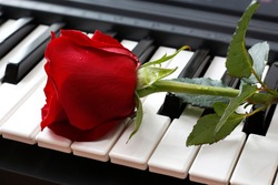 large beautiful red rose with drops on a musical instrument, on the keys, close-up with a blurred background, as a gift