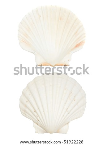 Large beautiful sea shell front and back isolated on white background