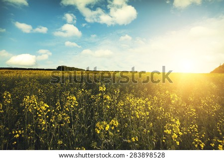 Large beautiful spring the field with a distant kind on a forest and dark sky #283898528