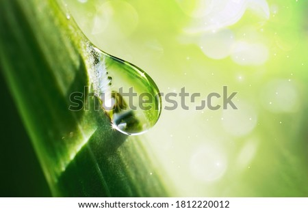 Large beautiful water drop sparkle in sun on leaf in sunlight, macro. Big droplet of morning dew outdoor, beautiful round bokeh. Amazing artistic image of purity of nature.