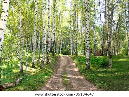Large Birch and Aspens Trees Forest in summer.