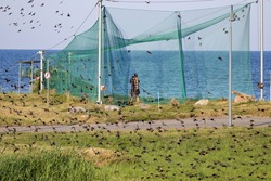 Large bird trap at the ornithological station in Lithuania located at cape Vente near Curonian lagoon .Birds catching in nets with purpose to follow their migration route.
