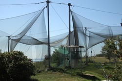 Large bird trap at the ornithological station, near the Curonian Lagoon, Ventes ragas. Lithuania