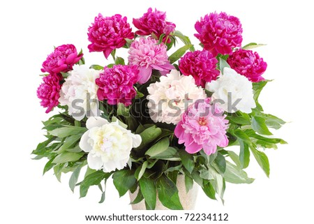 Large bouquet of pions on the white - stock photo