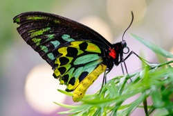 large Butterfly with bokeh balls