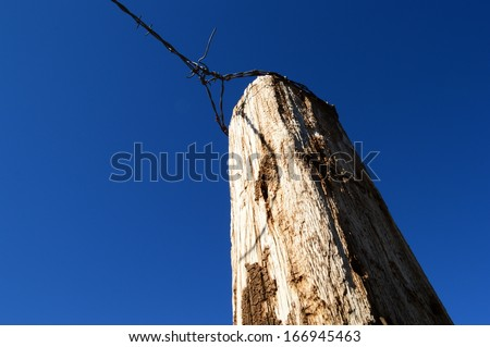 Large cattle fence post skyward view