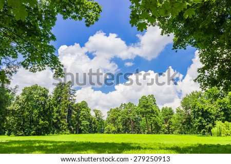 Large clearing in the park among the conifers and deciduous trees on the background of the sky with clouds #279250913