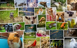 Large collage including pets zoo wildlife and farm animals