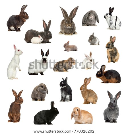 Large collection of rabbit, pet and exotic, in different position, Isolated on white background.