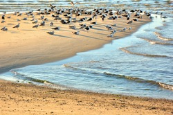 Large colony of seagulls gathered on Cape Cod beach just before sunset.
