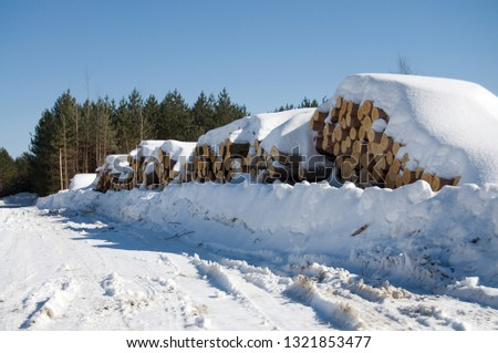 Large Cords of Wood from Deforestation of Beautiful Evergreens During the Winter Season Horizontal #1321853477