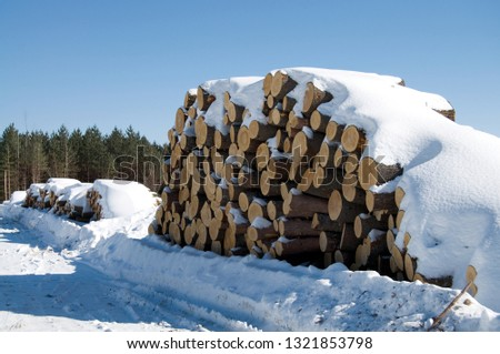 Large Cords of Wood from Deforestation of Beautiful Evergreens During the Winter Season Horizontal #1321853798