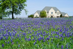 Large country house with Bluebonnet flowers during spring time around the Texas Hill Country, USA