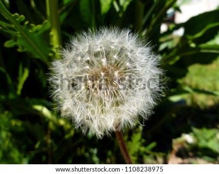 Free Photos Puff Ball Flower Avopix