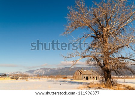 Large, deciduous tree, barn, and mountains on a beautiful winter day in Montana