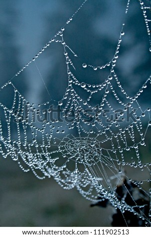 Large dew drops on spiderweb, blue background #111902513