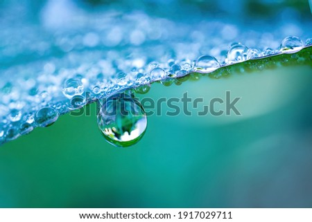 Large drop water reflects environment. Nature spring photography — raindrops on plant leaf. Background image in turquoise and green tones with bokeh.