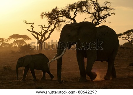 Large elephant matriarch and her calf walking across the dusty savanna plain