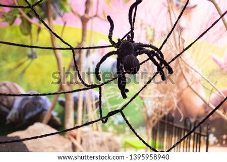 Large fake black spider with spider web. #1395958940
