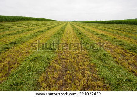 Large Field with Freshly Cut Grass Ready for Rolling into Hay #321022439