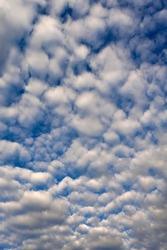 Large fleecy clouds (altocumulus), Bavaria, Germany
