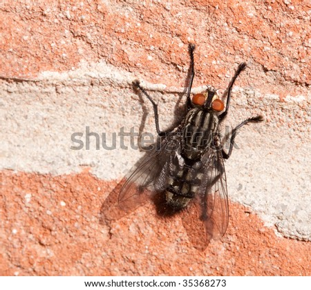 Large fly sunning itself on a wall